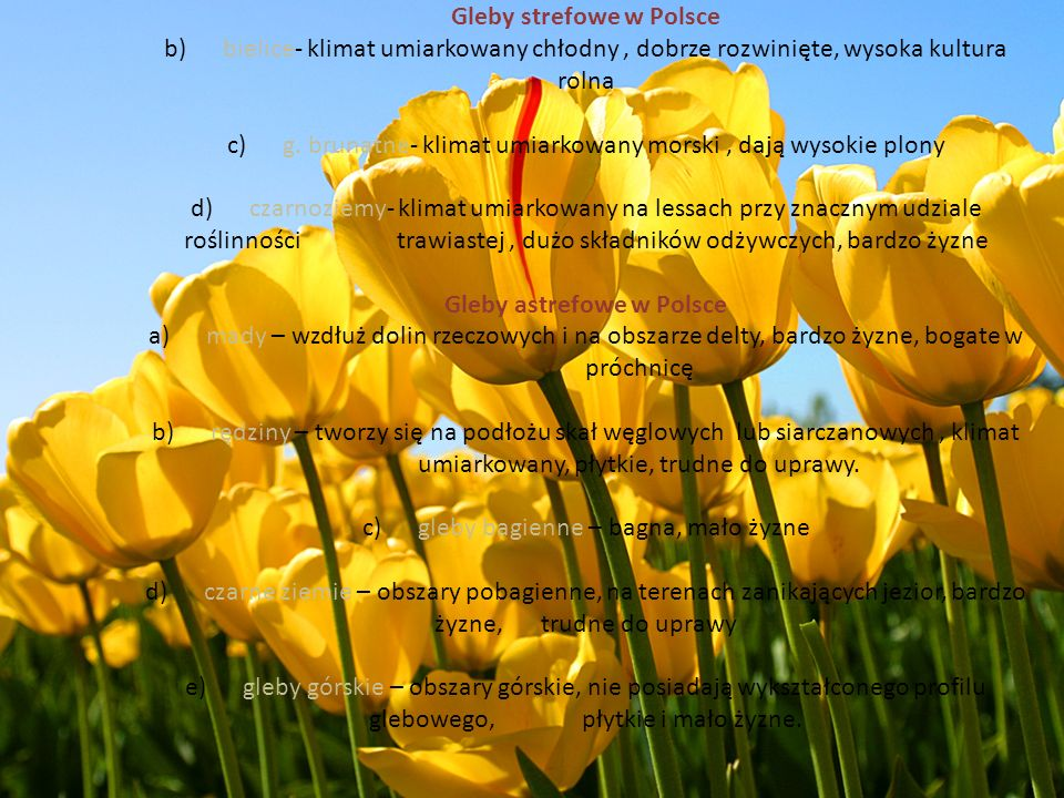 Gleby strefowe w Polsce b) bielice- klimat umiarkowany chłodny , dobrze rozwinięte, wysoka kultura rolna c) g.