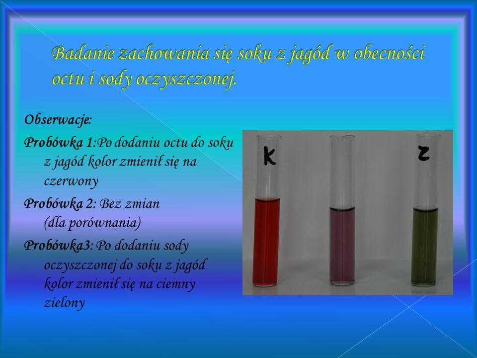 Badanie zachowania się soku z jagód w obecności octu i sody oczyszczonej.
