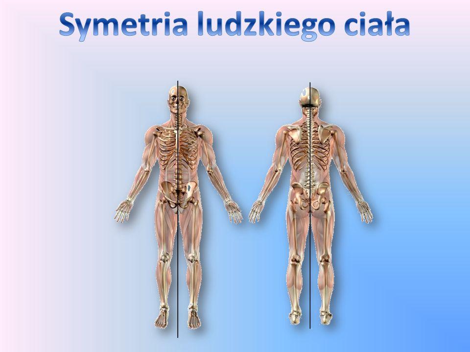 Symetria ludzkiego ciała