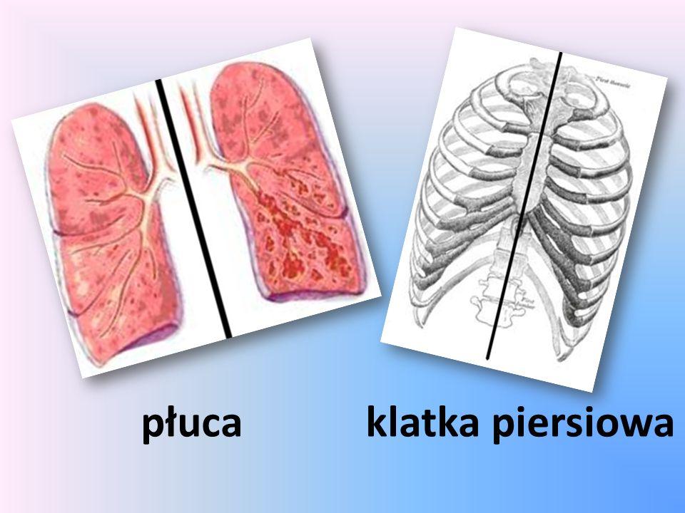 płuca klatka piersiowa