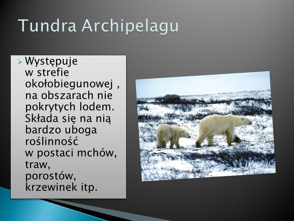 Tundra Archipelagu