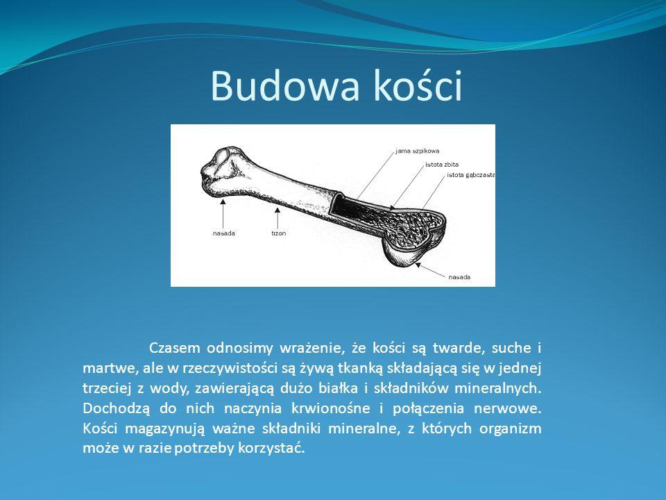 Budowa kości