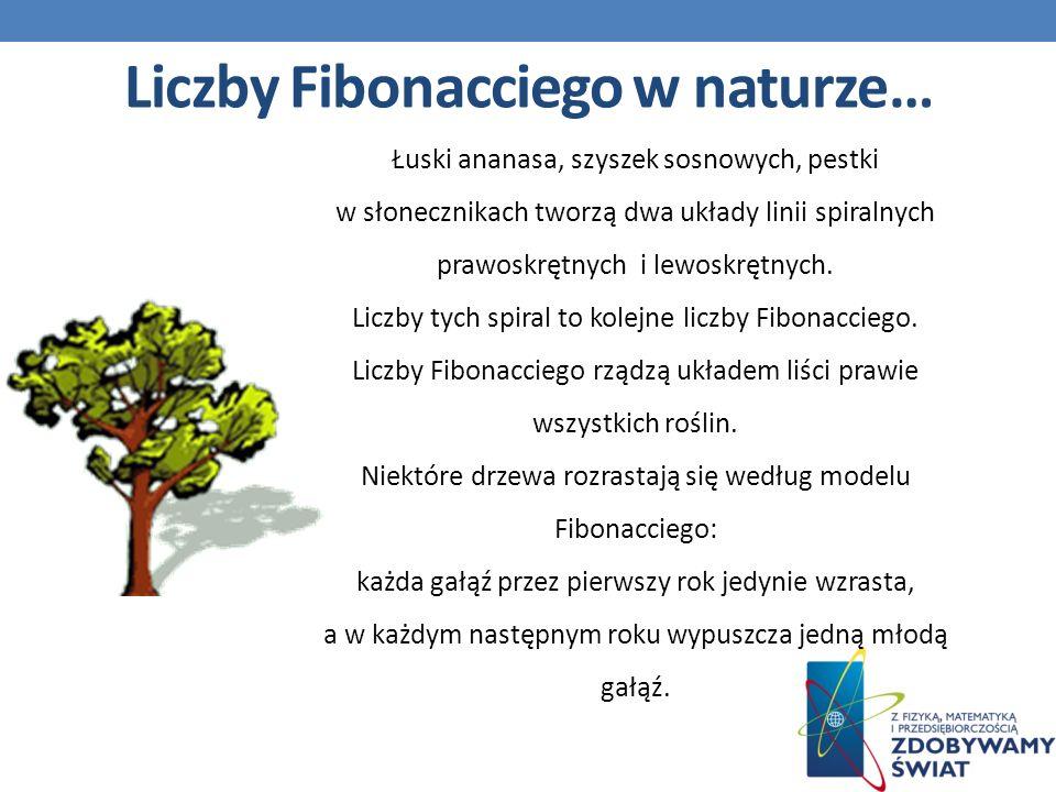 Liczby Fibonacciego w naturze…