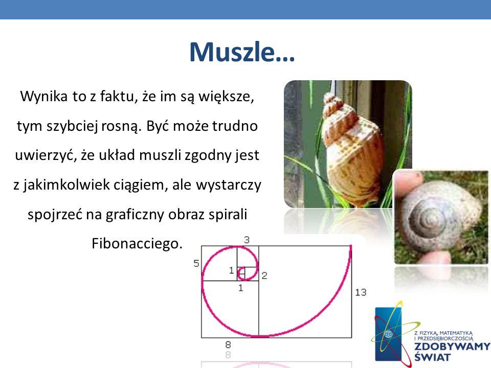 Muszle…