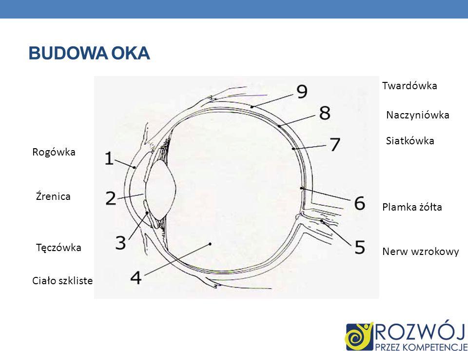 Budowa oka Twardówka Naczyniówka Siatkówka Rogówka Źrenica