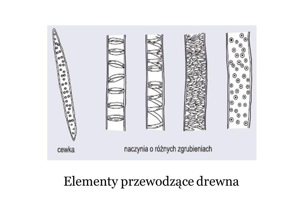 Elementy przewodzące drewna