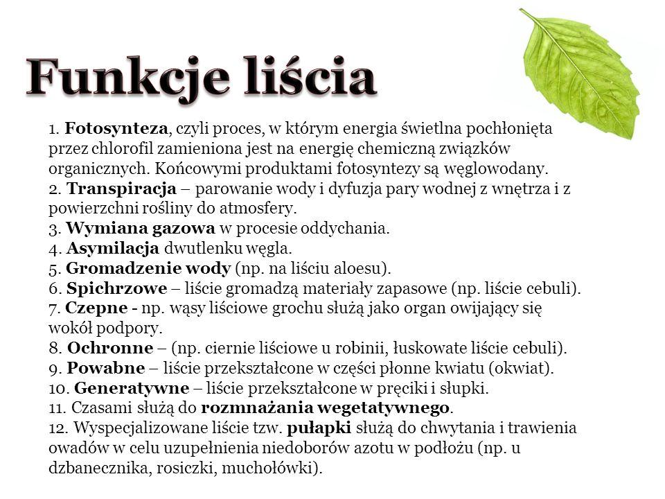 Funkcje liścia
