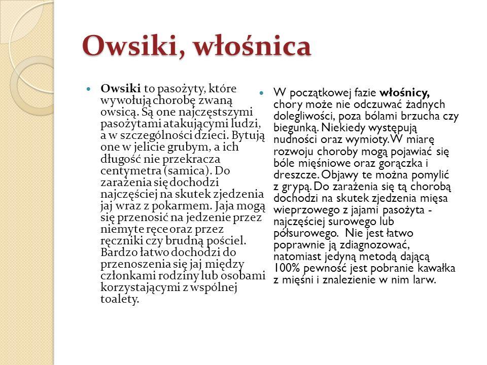Owsiki, włośnica