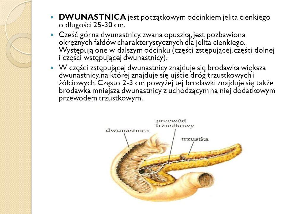 DWUNASTNICA jest początkowym odcinkiem jelita cienkiego o długości 25-30 cm.