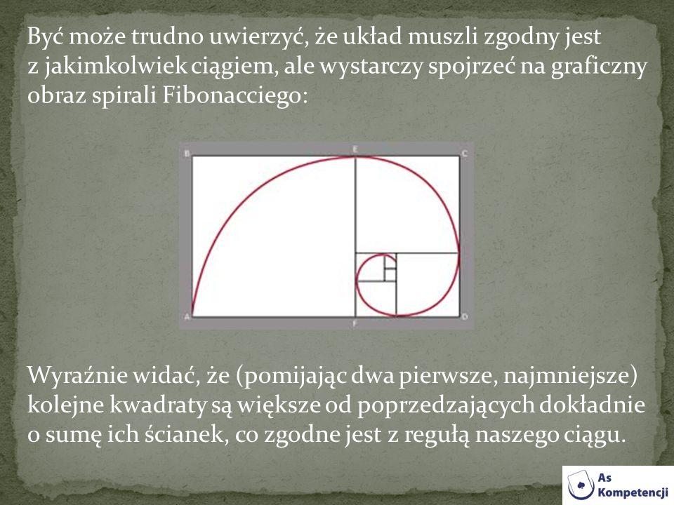 Być może trudno uwierzyć, że układ muszli zgodny jest z jakimkolwiek ciągiem, ale wystarczy spojrzeć na graficzny obraz spirali Fibonacciego: