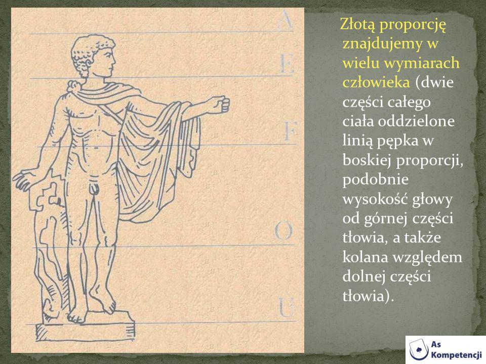 Złotą proporcję znajdujemy w wielu wymiarach człowieka (dwie części całego ciała oddzielone linią pępka w boskiej proporcji, podobnie wysokość głowy od górnej części tłowia, a także kolana względem dolnej części tłowia).