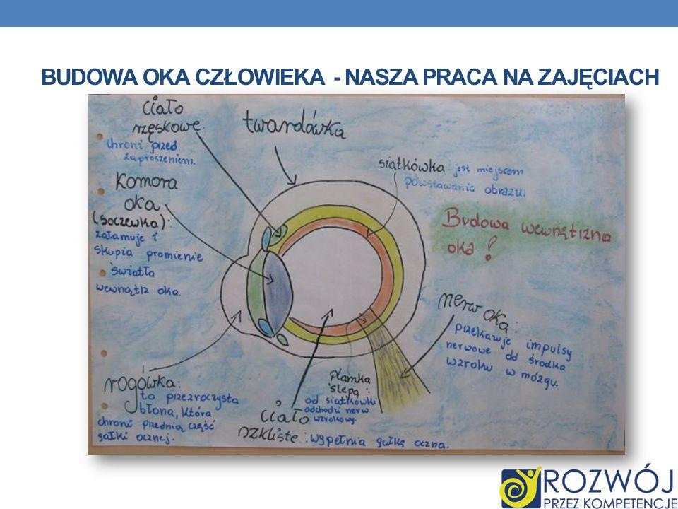 Budowa Oka człowieka - nasza praca na zajęciach