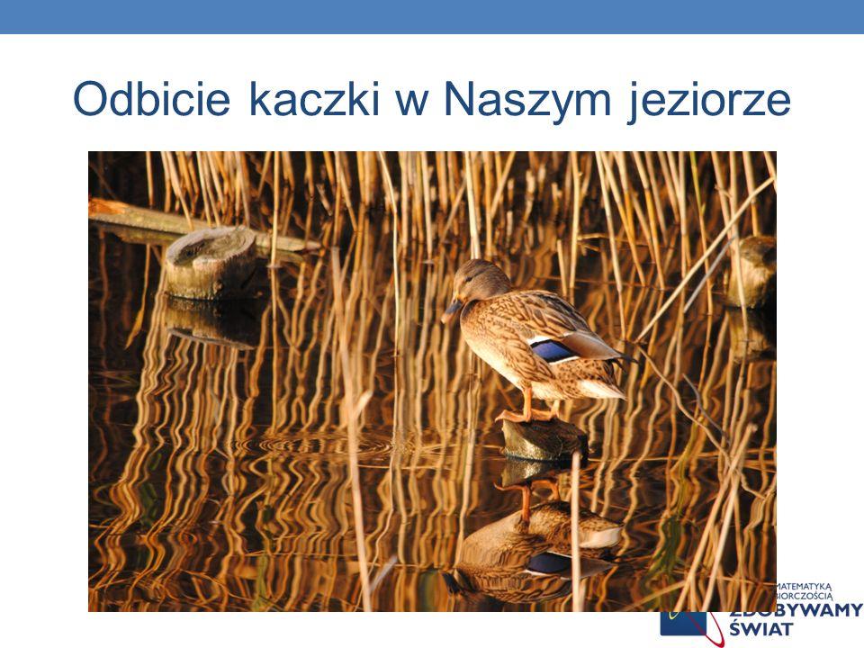 Odbicie kaczki w Naszym jeziorze