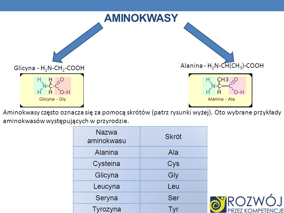 Aminokwasy Alanina - H2N-CH(CH3)-COOH Glicyna - H2N-CH2-COOH