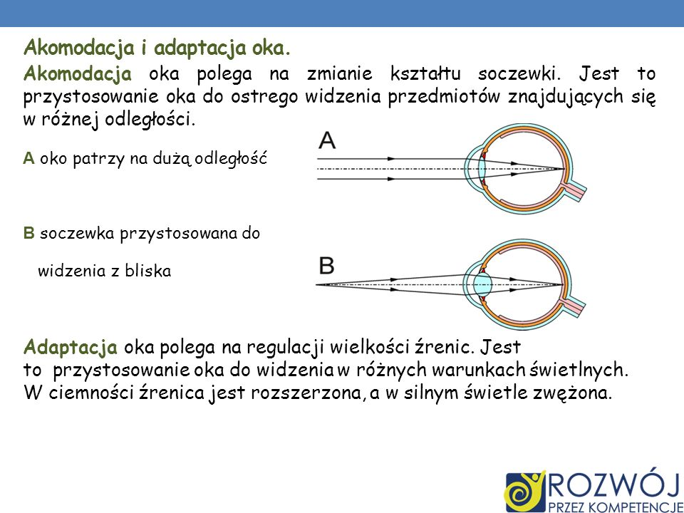 Akomodacja i adaptacja oka.