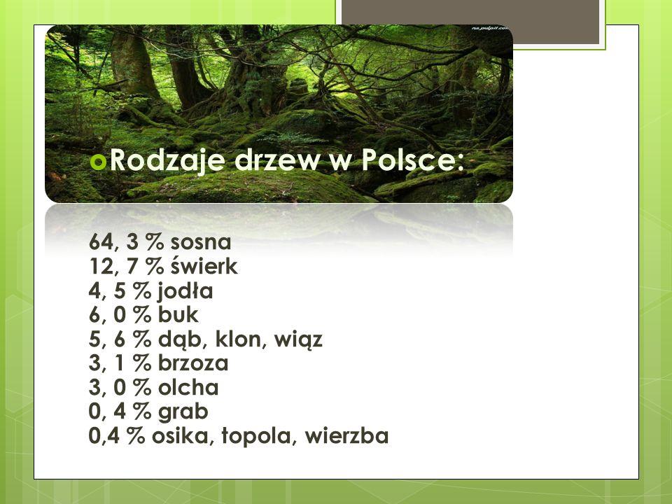 Rodzaje drzew w Polsce: