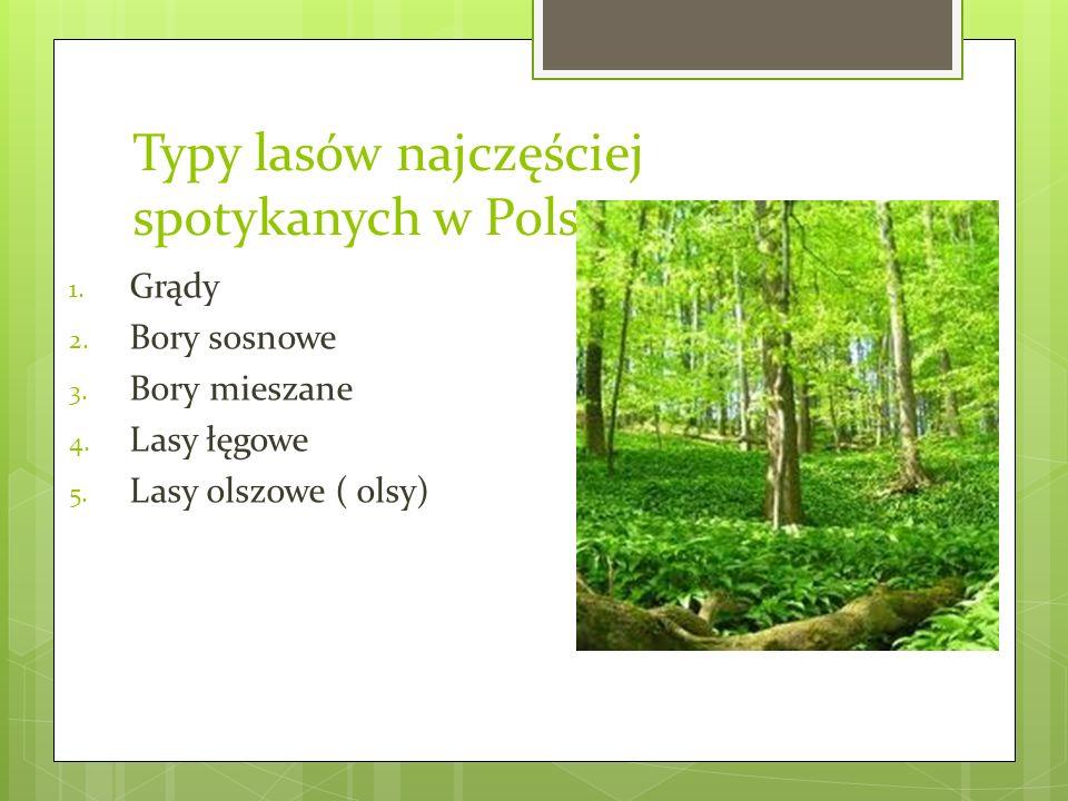 Typy lasów najczęściej spotykanych w Polsce