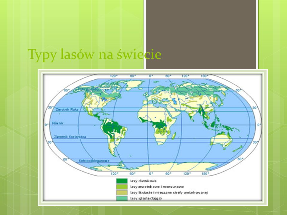 Typy lasów na świecie
