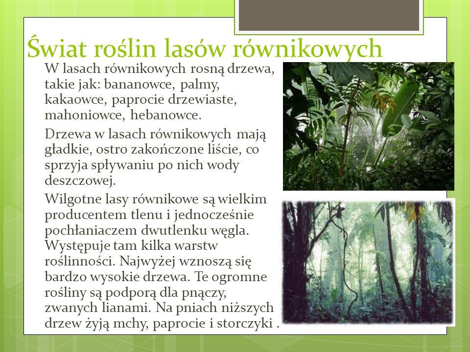 Świat roślin lasów równikowych