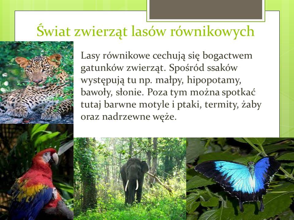 Świat zwierząt lasów równikowych