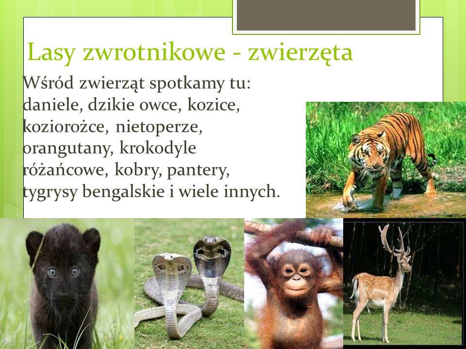 Lasy zwrotnikowe - zwierzęta