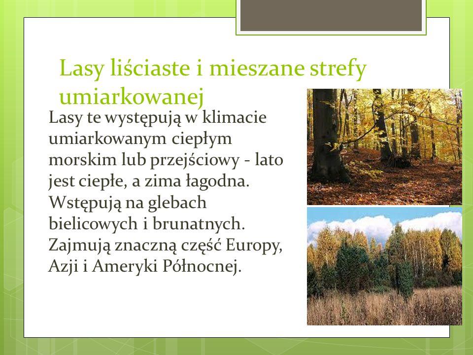 Lasy liściaste i mieszane strefy umiarkowanej