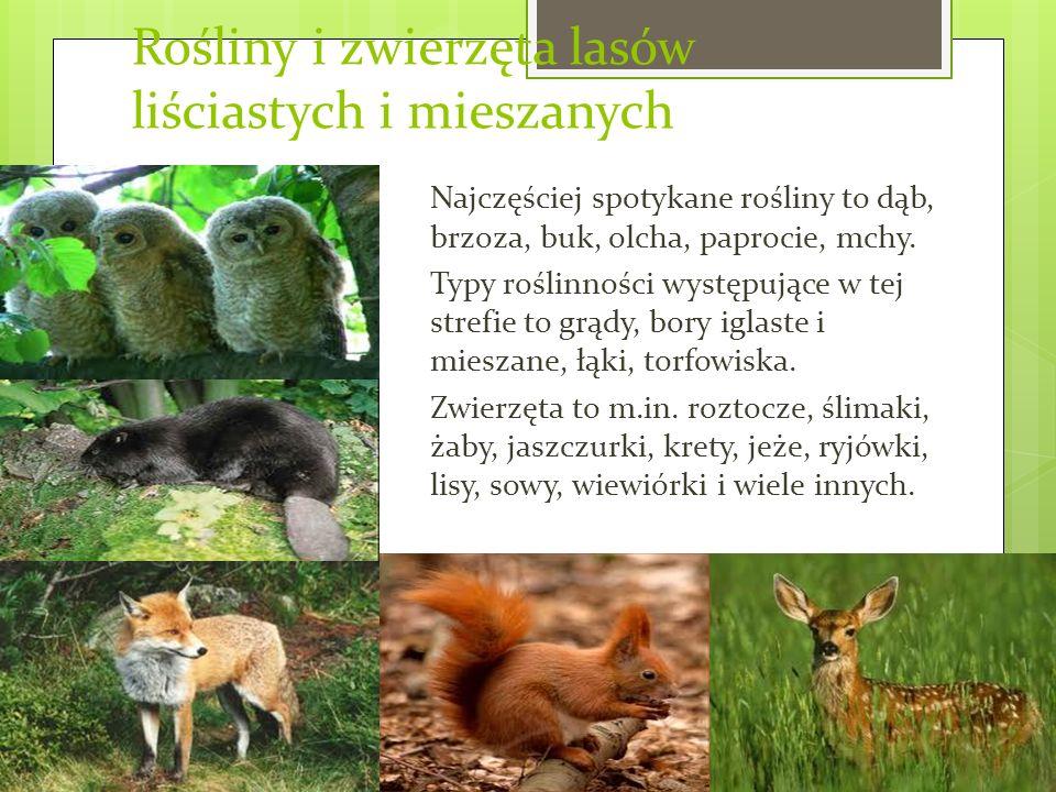 Rośliny i zwierzęta lasów liściastych i mieszanych