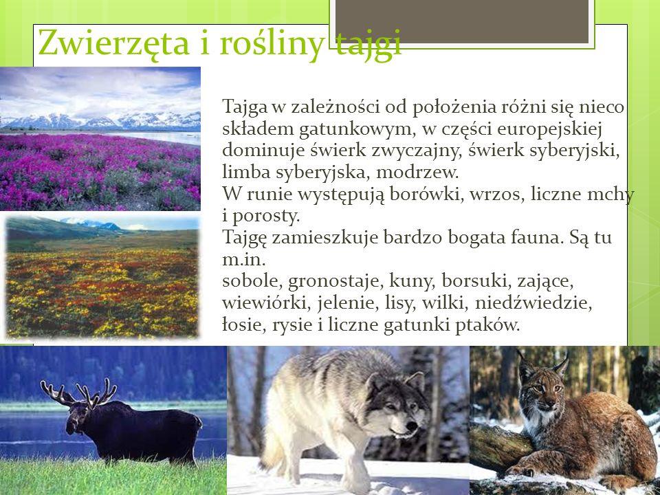 Zwierzęta i rośliny tajgi