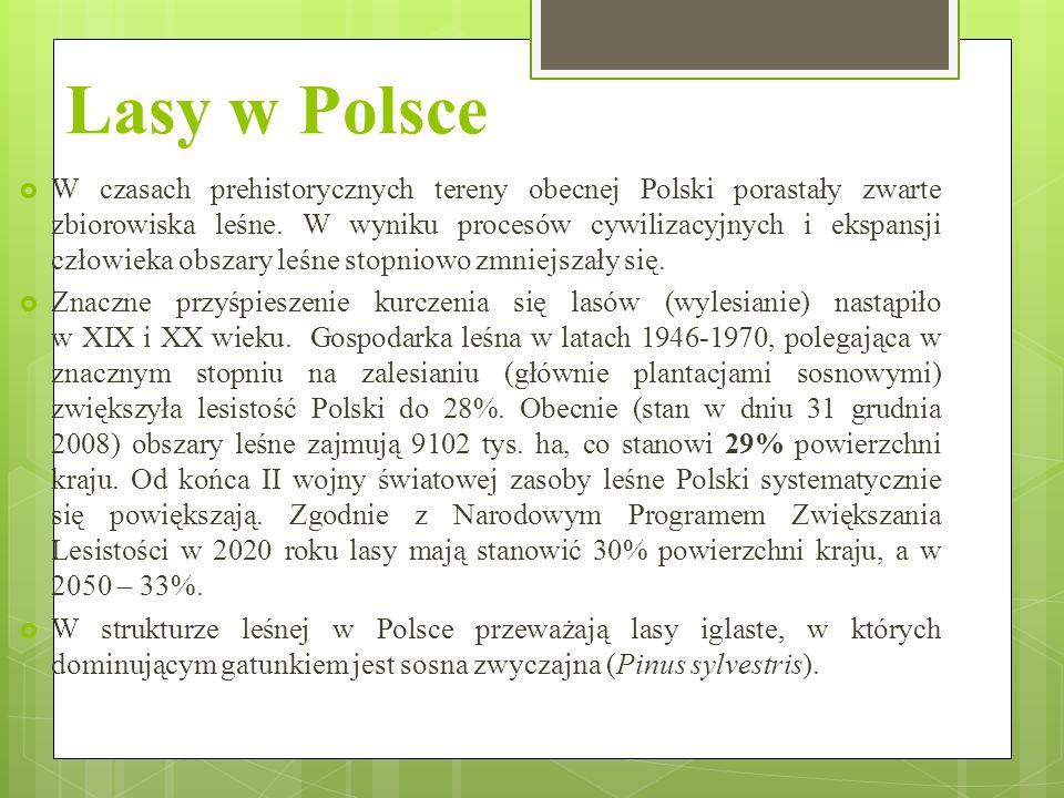 Lasy w Polsce