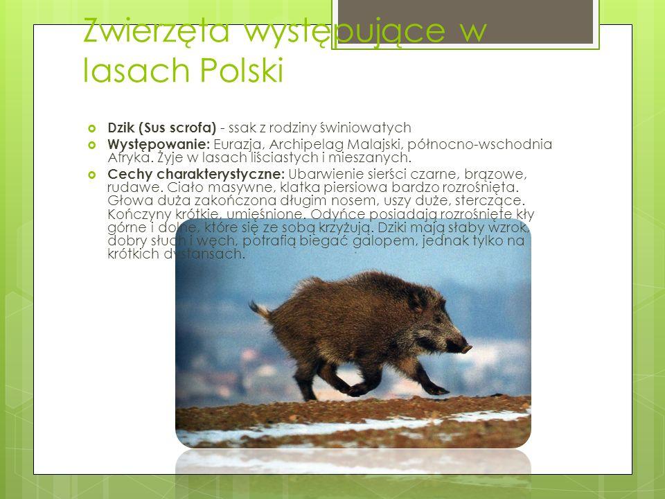 Zwierzęta występujące w lasach Polski