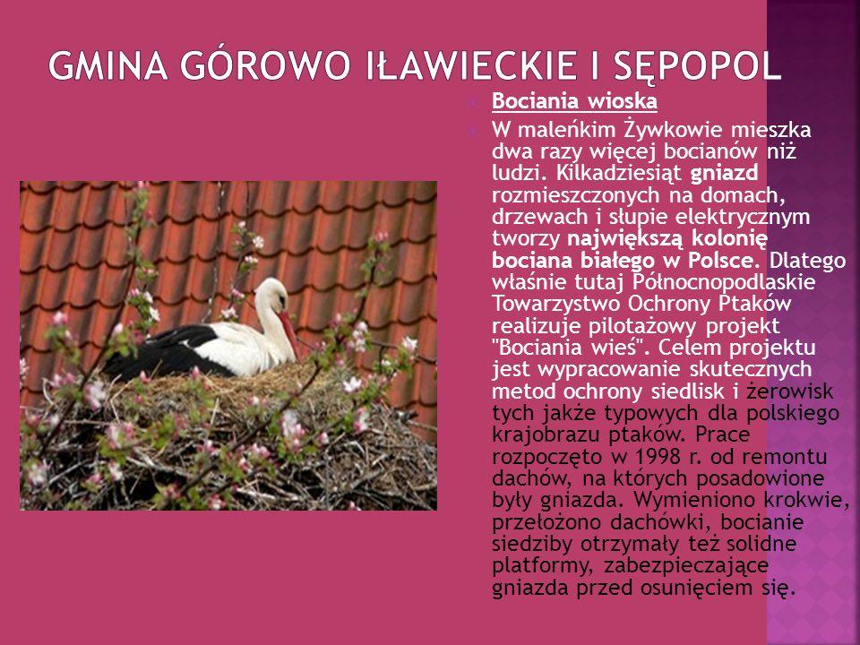 Gmina Górowo Iławieckie i Sępopol