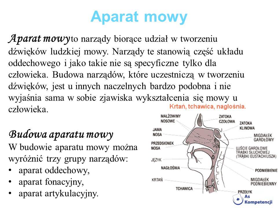 Aparat mowy Aparat mowy to narządy biorące udział w tworzeniu