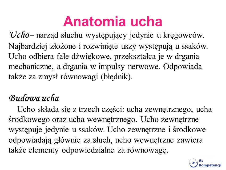 Anatomia ucha Ucho – narząd słuchu występujący jedynie u kręgowców.