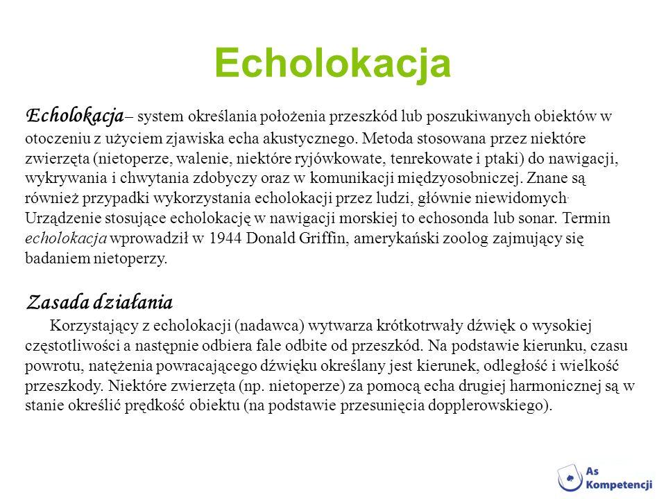 Echolokacja Zasada działania