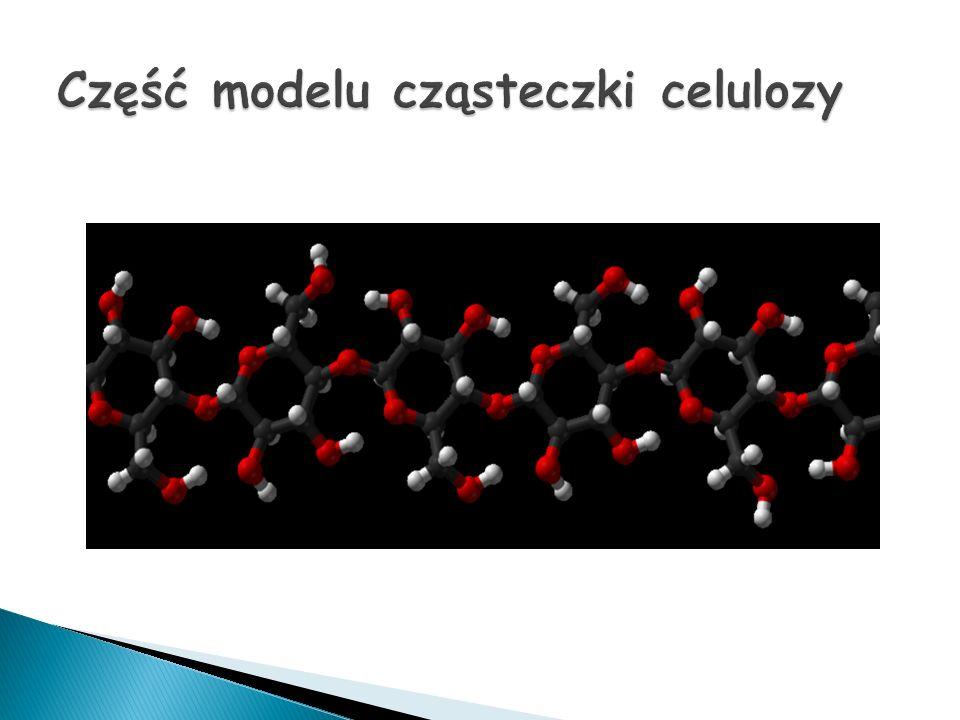 Część modelu cząsteczki celulozy