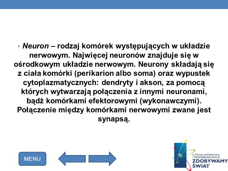 Neuron – rodzaj komórek występujących w układzie nerwowym