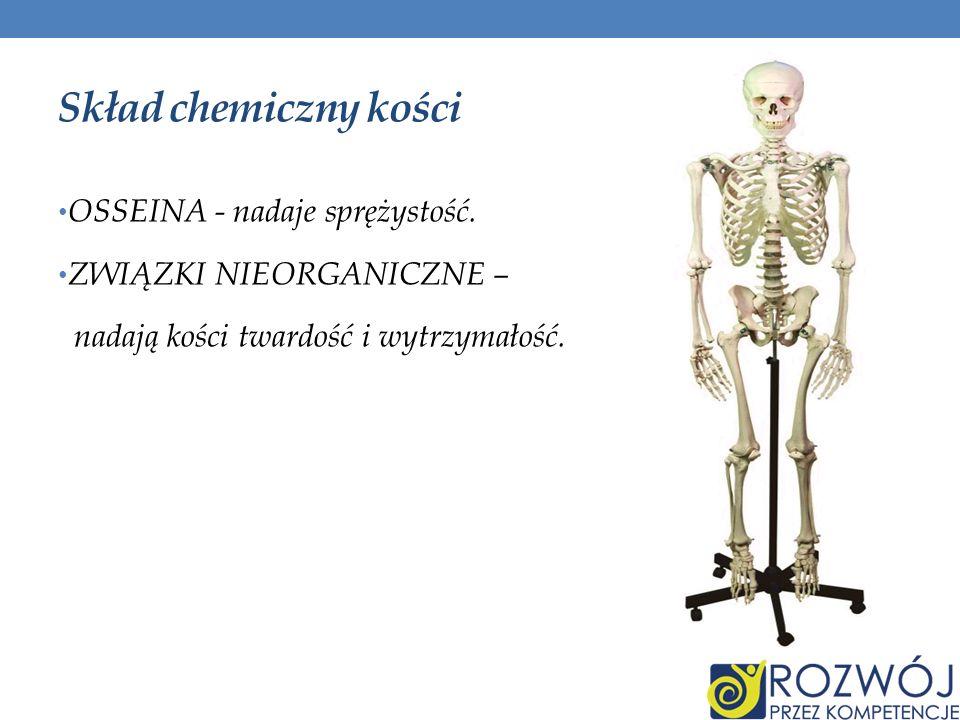 Skład chemiczny kości OSSEINA - nadaje sprężystość.