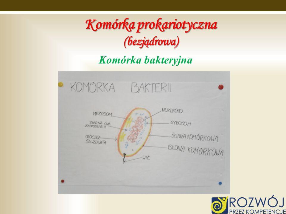 Komórka prokariotyczna (bezjądrowa)