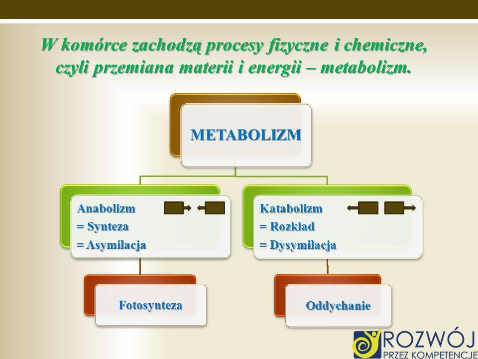 W komórce zachodzą procesy fizyczne i chemiczne, czyli przemiana materii i energii – metabolizm.