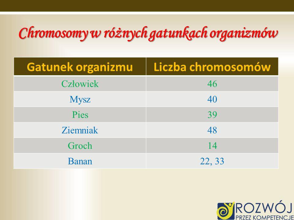 Chromosomy w różnych gatunkach organizmów