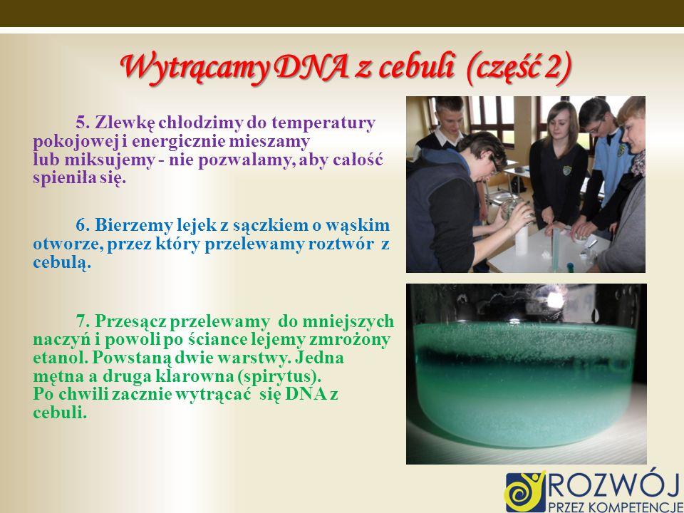 Wytrącamy DNA z cebuli (część 2)