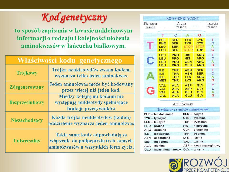 Kod genetyczny Właściwości kodu genetycznego