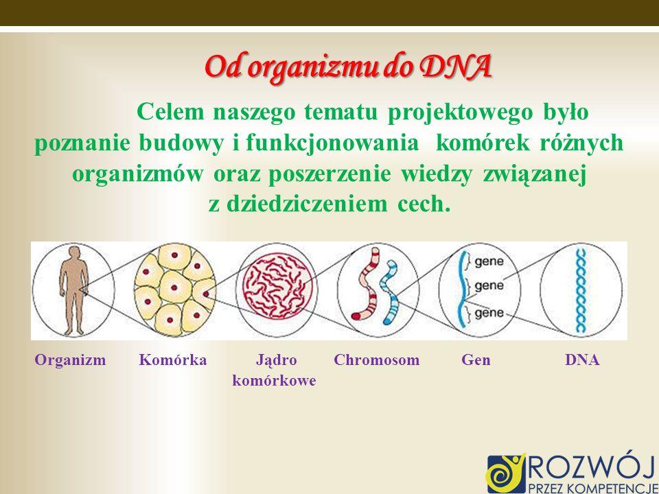 Od organizmu do DNA z dziedziczeniem cech.