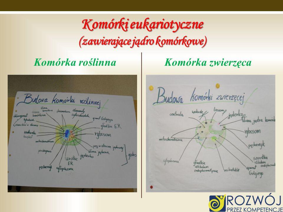 Komórki eukariotyczne (zawierające jądro komórkowe)
