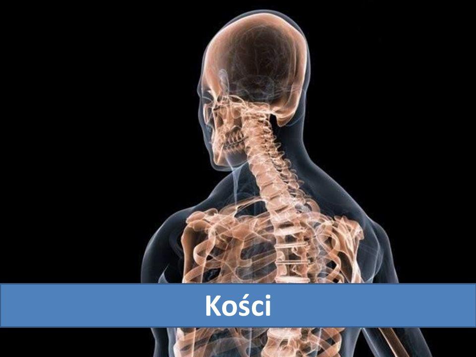 Rodzaje kości Kości