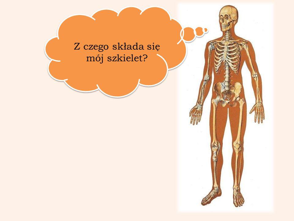Z czego składa się mój szkielet