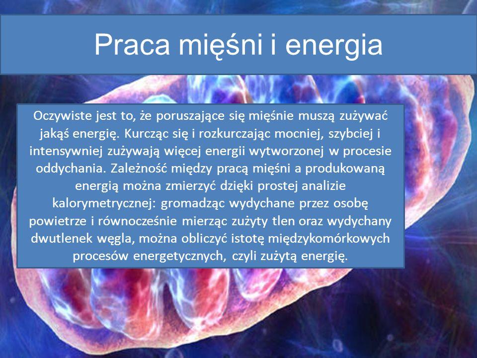 Praca mięśni i energia
