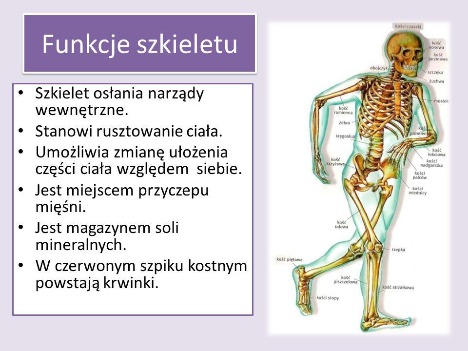 Funkcje szkieletu Szkielet osłania narządy wewnętrzne.