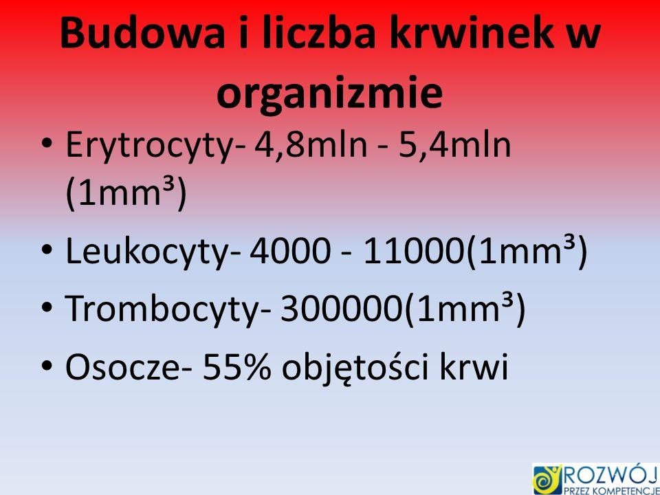 Budowa i liczba krwinek w organizmie