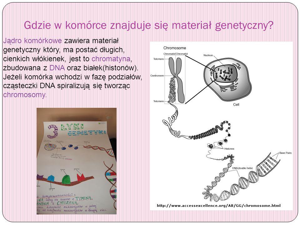 Gdzie w komórce znajduje się materiał genetyczny
